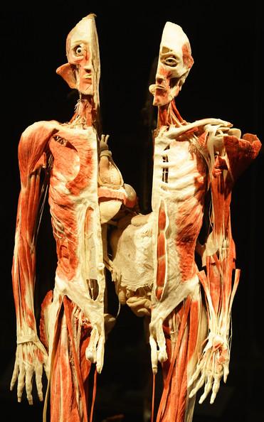 Body+Worlds+Exhibition+Gunther+Von+Hagens+fzXy8gtfqIMl