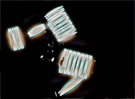 RTEmagicC_diatomees-ocean-silicium_Lemar-IUEM_txdam34383_826236