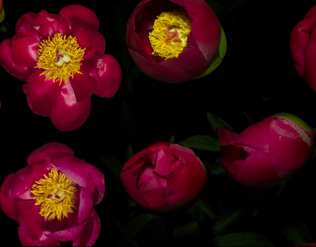 Capture d'écran 2019-06-02 à 23.03.46
